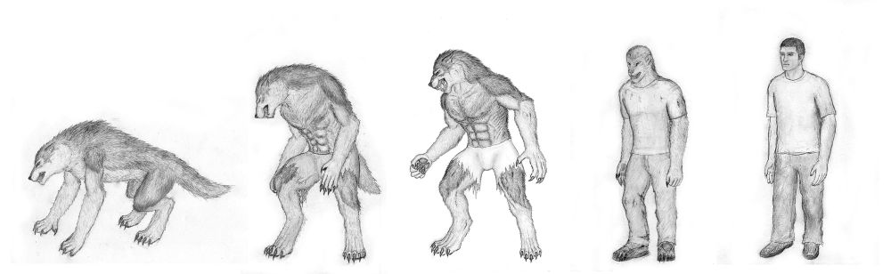 Wolf Transformation Sequence Of Lycanthropy ...